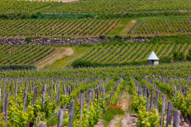 sauternes-la-maison-du-vigneron-paysage-sauternes-e1487166291331.jpg